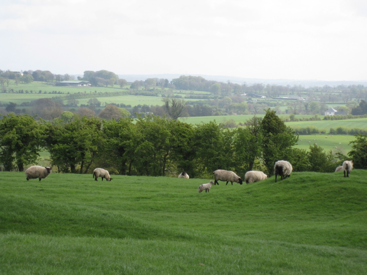 Ancient mounds, Irish sheep and the Ark of the Covenant?