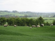Friday Foto! Ancient Mounds, Irish Sheep and the Ark of the Covenant?